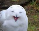 Yeehaw owl
