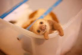 slothinbox