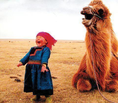 Nine out of ten camels agree, it's the best joke they've ever heard