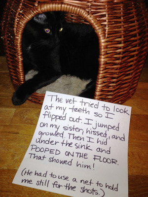 o-I-flipped-out-i-jumped-on-my-sister-hissed-and-growled-then-i-hid-under-the-sink-and-pooped-on-the-floor-that-showed-him-he-had-to-use-a-net-to-hold-me-
