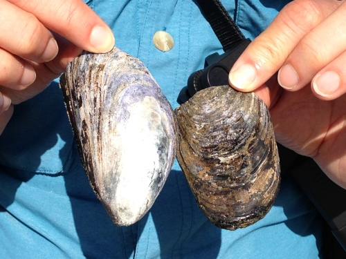Admiring MH's mussels, during a beach hike.