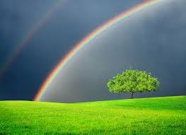 rainbros