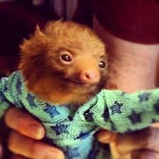 No, this picture is not apropos to the story, but would you rather see a pool of blood on a pizza parlor floor, or a baby sloth in pjs?