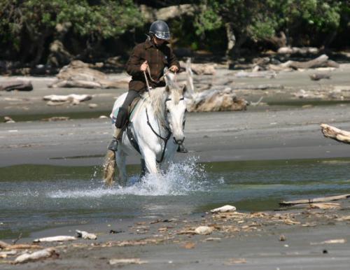 horsecrossing