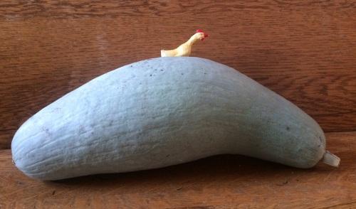 bluebananasquash