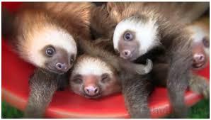 slothbucket